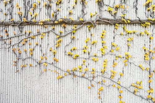 Yellow Vines on Gray Concrete Wall