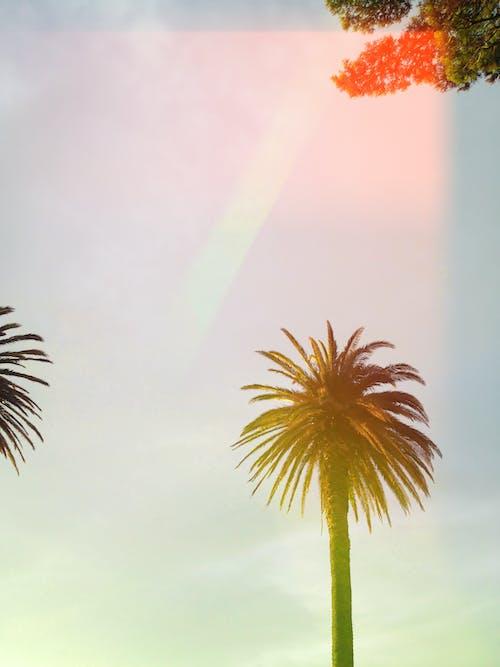 Gratis arkivbilde med dagslys, flora, himmel, landskap