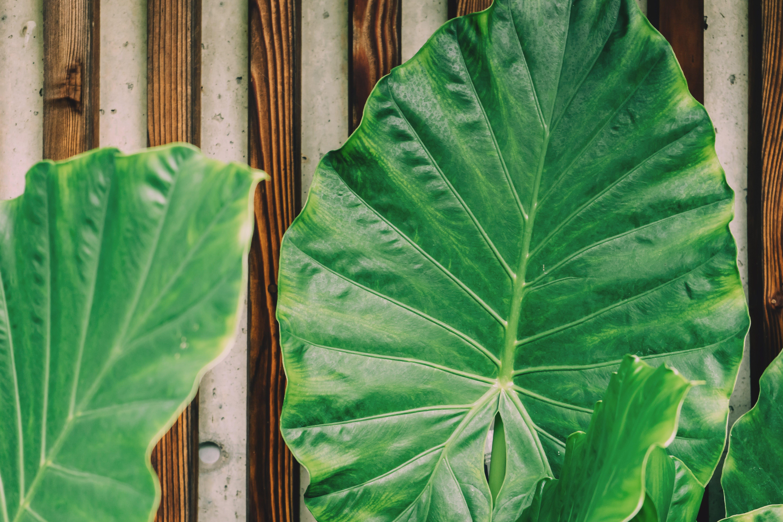 Green Plant Leaf Beside Brown Wooden Frame
