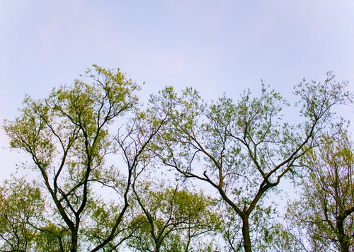 Free stock photo of branch, branches, nature, park