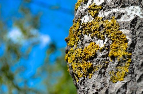 木, 森林, 樹皮の無料の写真素材