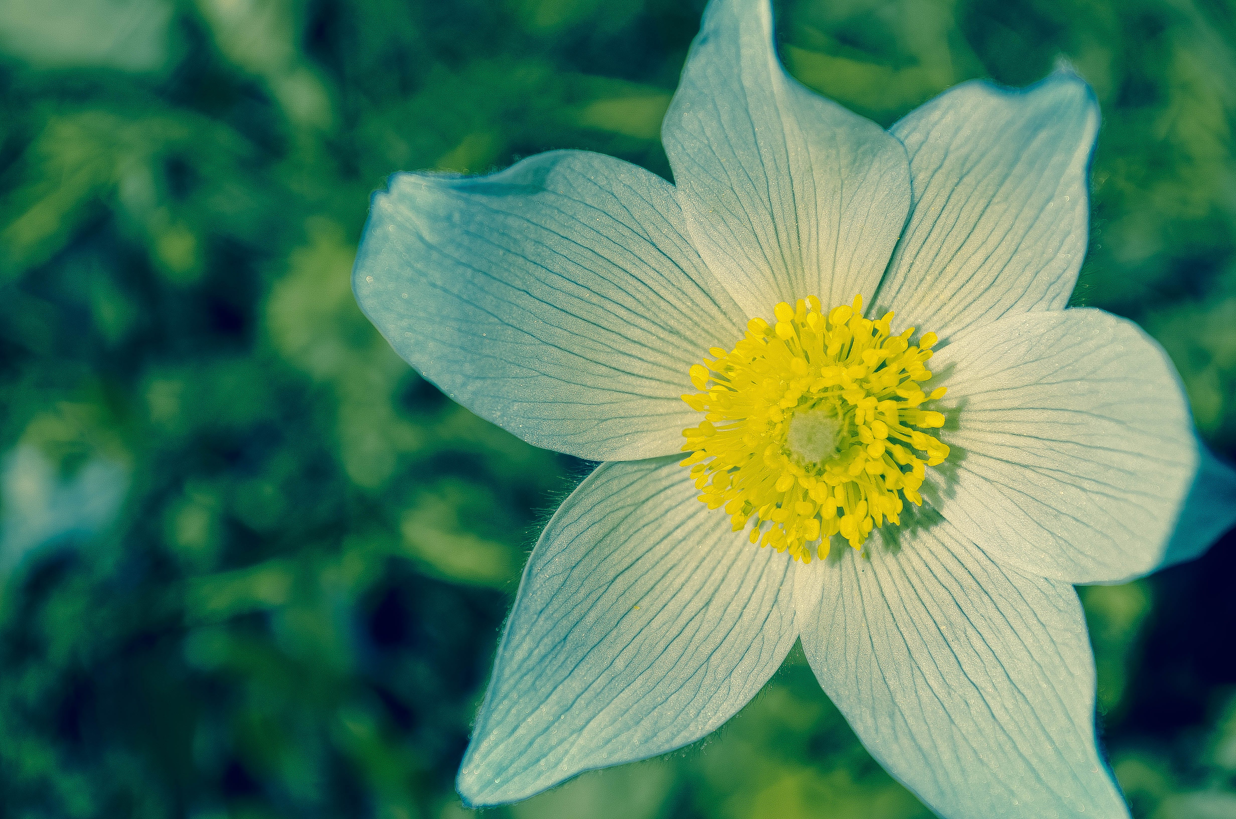 White and Yellow Flower during Daytime