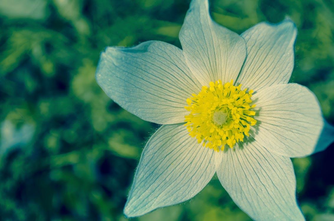 昼間の白と黄色の花