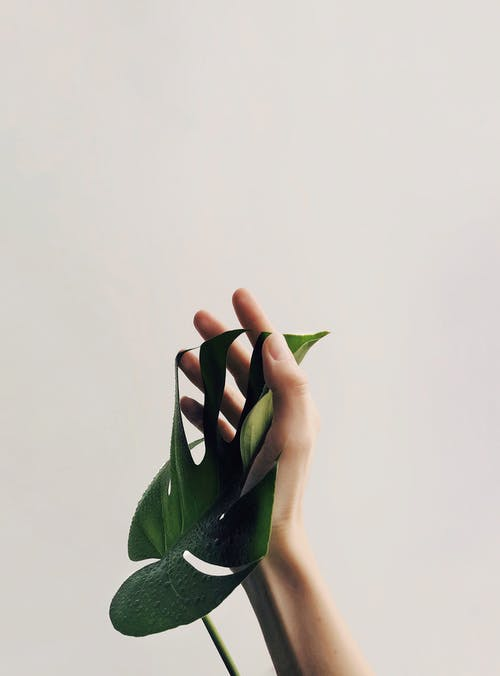 Gratis lagerfoto af close-up, copyspace, Fingerphilodendron, fingre