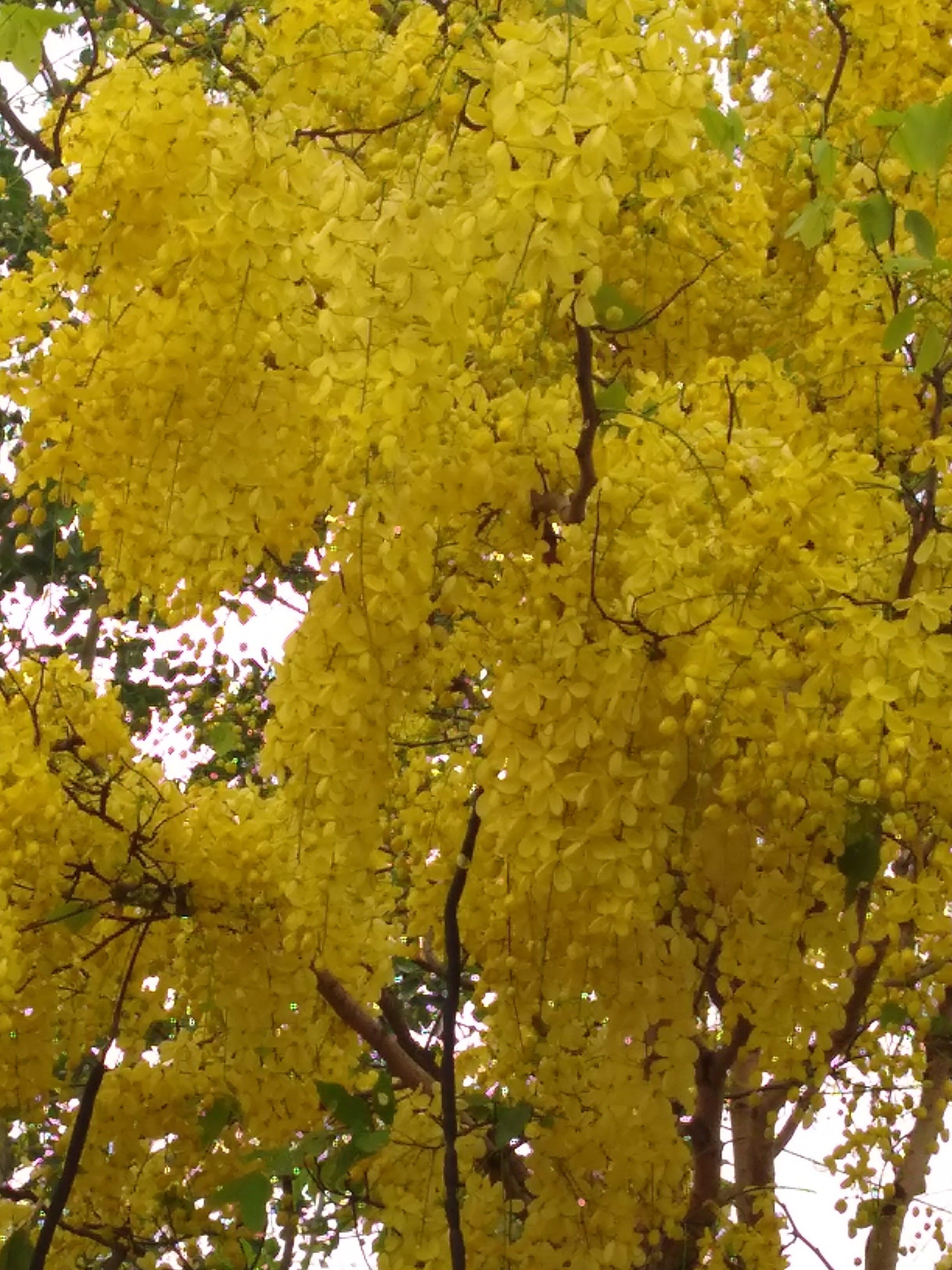 Δωρεάν στοκ φωτογραφιών με δέντρο