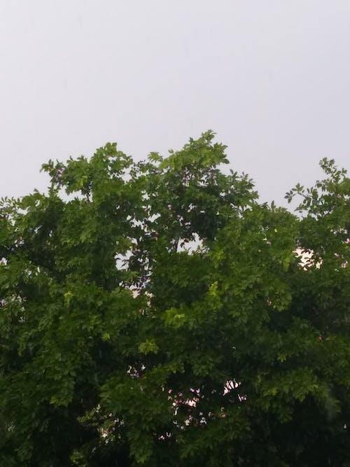 Foto d'estoc gratuïta de arbre