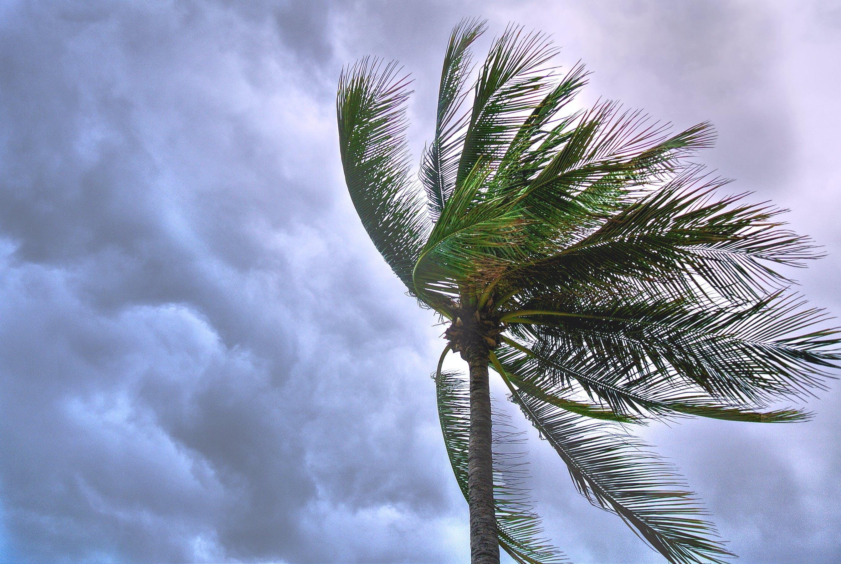 Close Up Photo of Coconut Tree