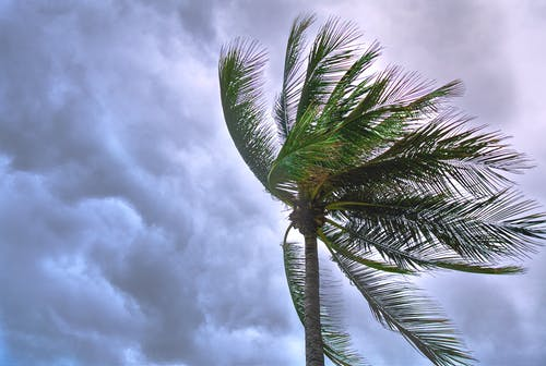 Close Up Photo of Coconut Tree