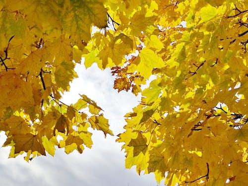 Fotobanka sbezplatnými fotkami na tému žlté jesenné lístie