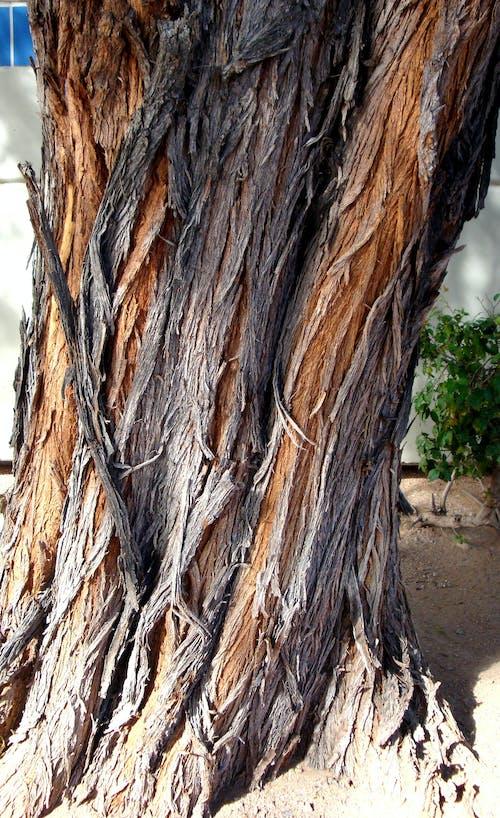 Immagine gratuita di corteccia di albero