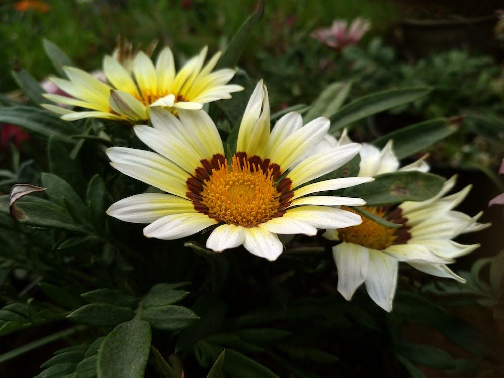 piękne kwiaty, żłobek