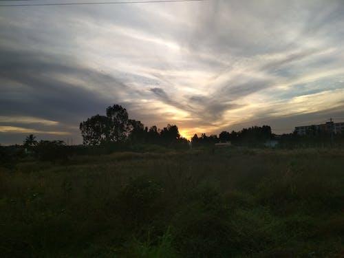 Free stock photo of evening sky, greenery, weather