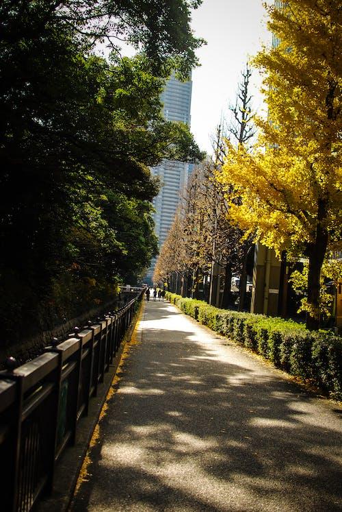 Бесплатное стоковое фото с дворец, деревья, желтый, зима