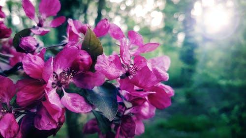 Gratis lagerfoto af blomst, farve, kronblad, natur blomst