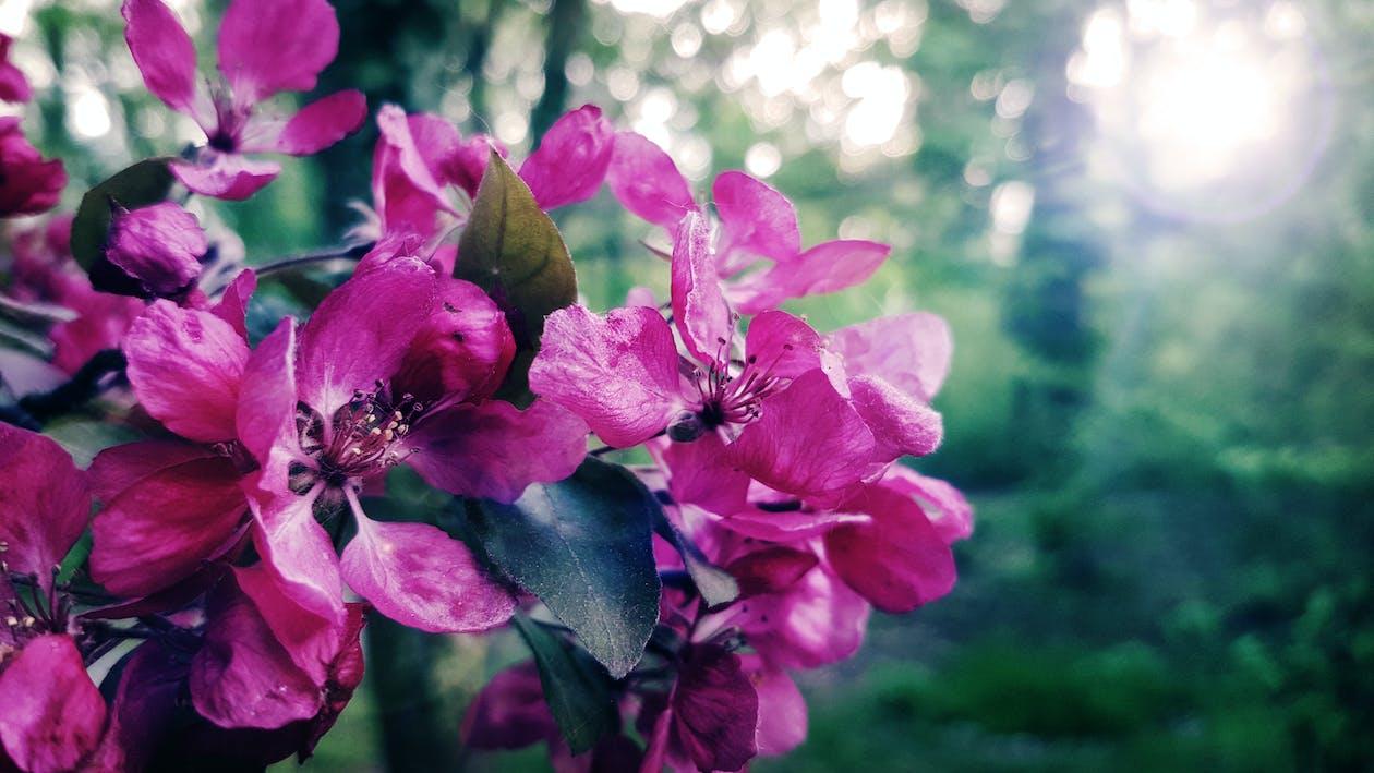 farba, krásny, kvet