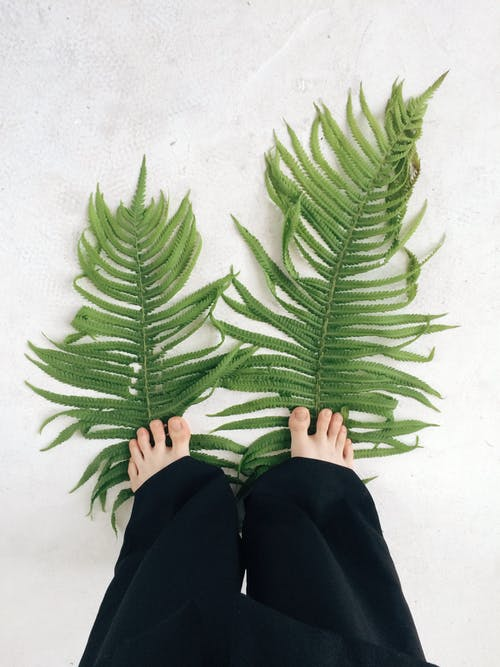 Two Fern Leaves Stepped by a Person