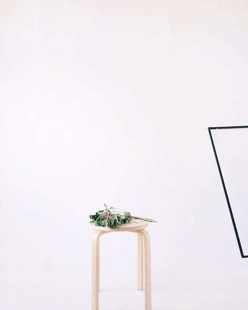 Foto stok gratis cahaya, dalam ruangan, flora, kehidupan tenang