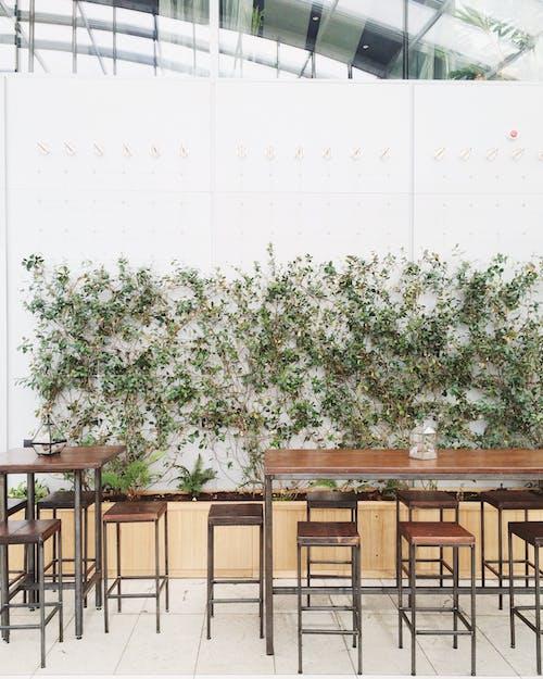 Ảnh lưu trữ miễn phí về bưc tương xanh la cây, gỗ, hoa, khu vườn trên mây