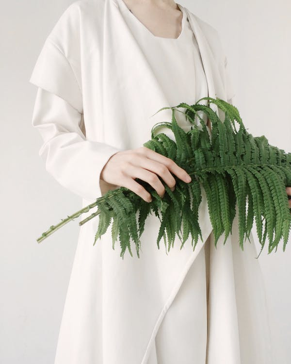 Person Holding Leaves