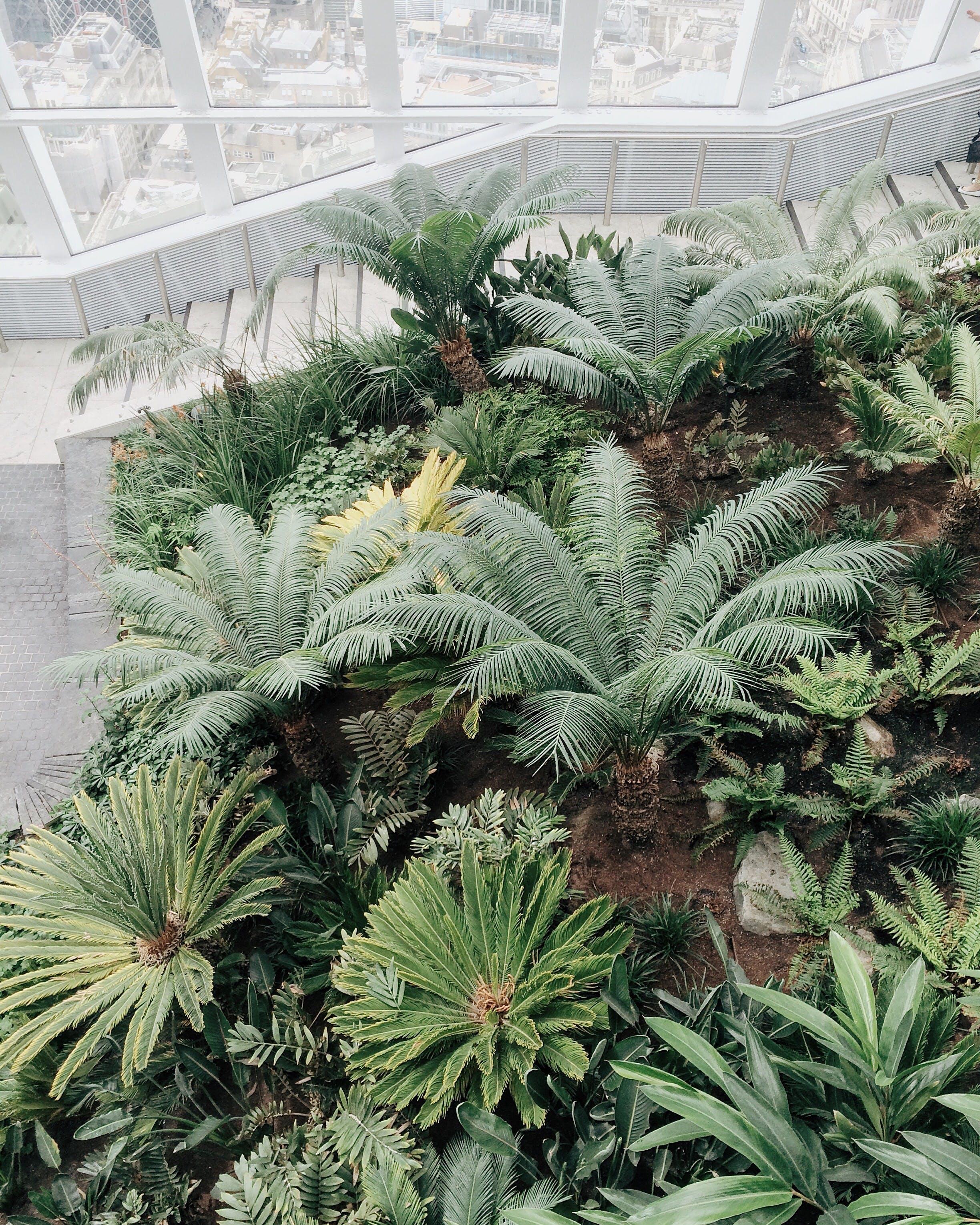 Green Leaf Plant Lot