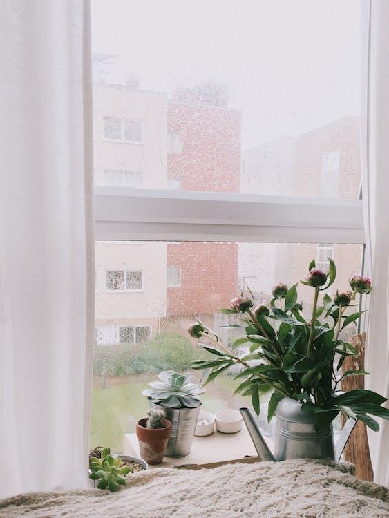 Grünblättrige Pflanzen Im Vorderen Klarglasfenster Mit Weißem Rahmen