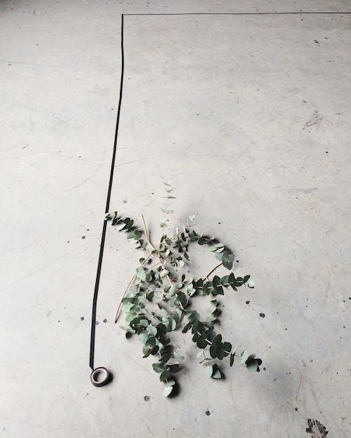 Foto stok gratis beton, bunga, Desain, flora