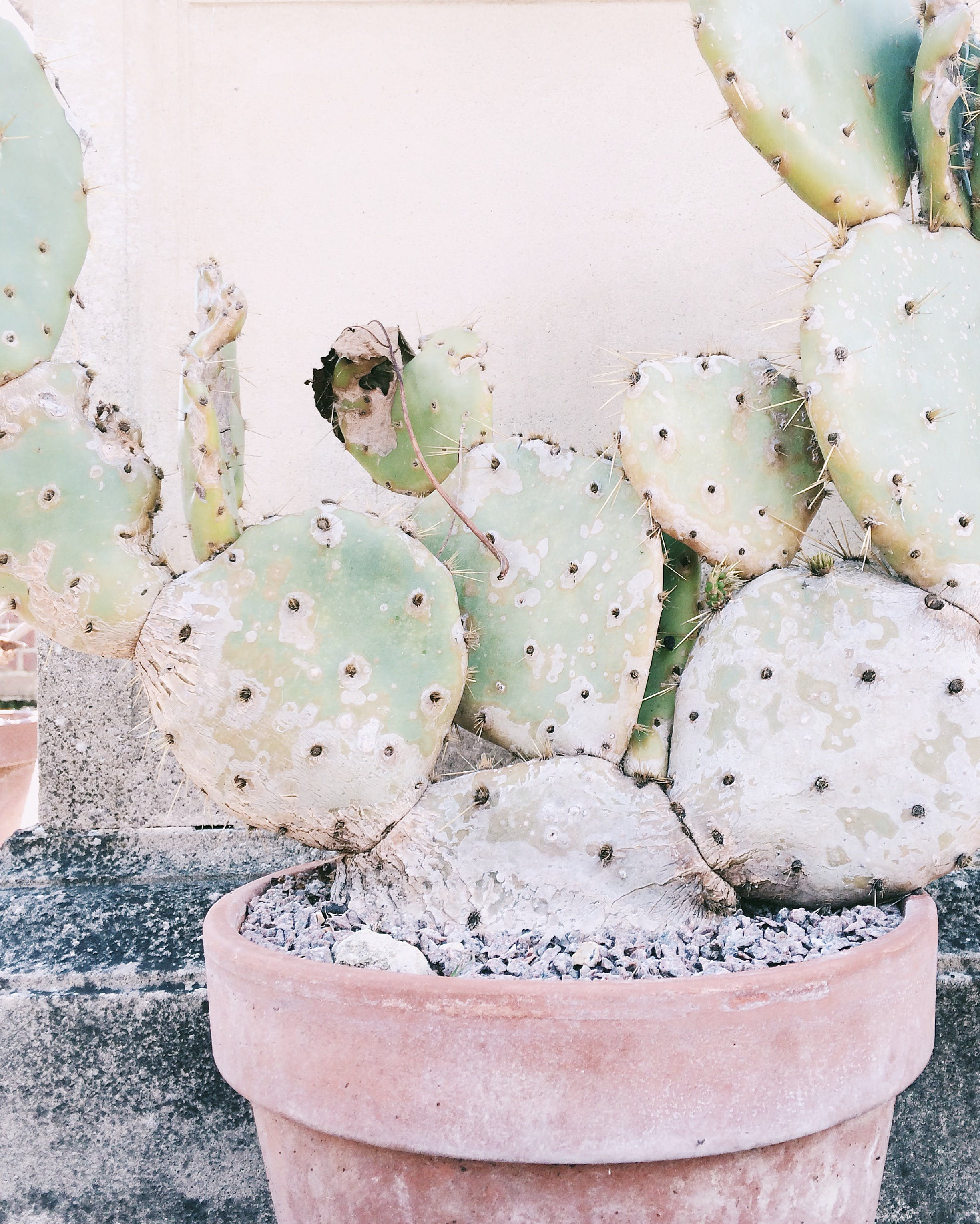 Close Up Photography of Cactus Plant in Clay Plant Pot