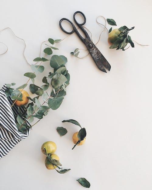 aranjman, ayrıntı, beyaz, bitkibilim içeren Ücretsiz stok fotoğraf