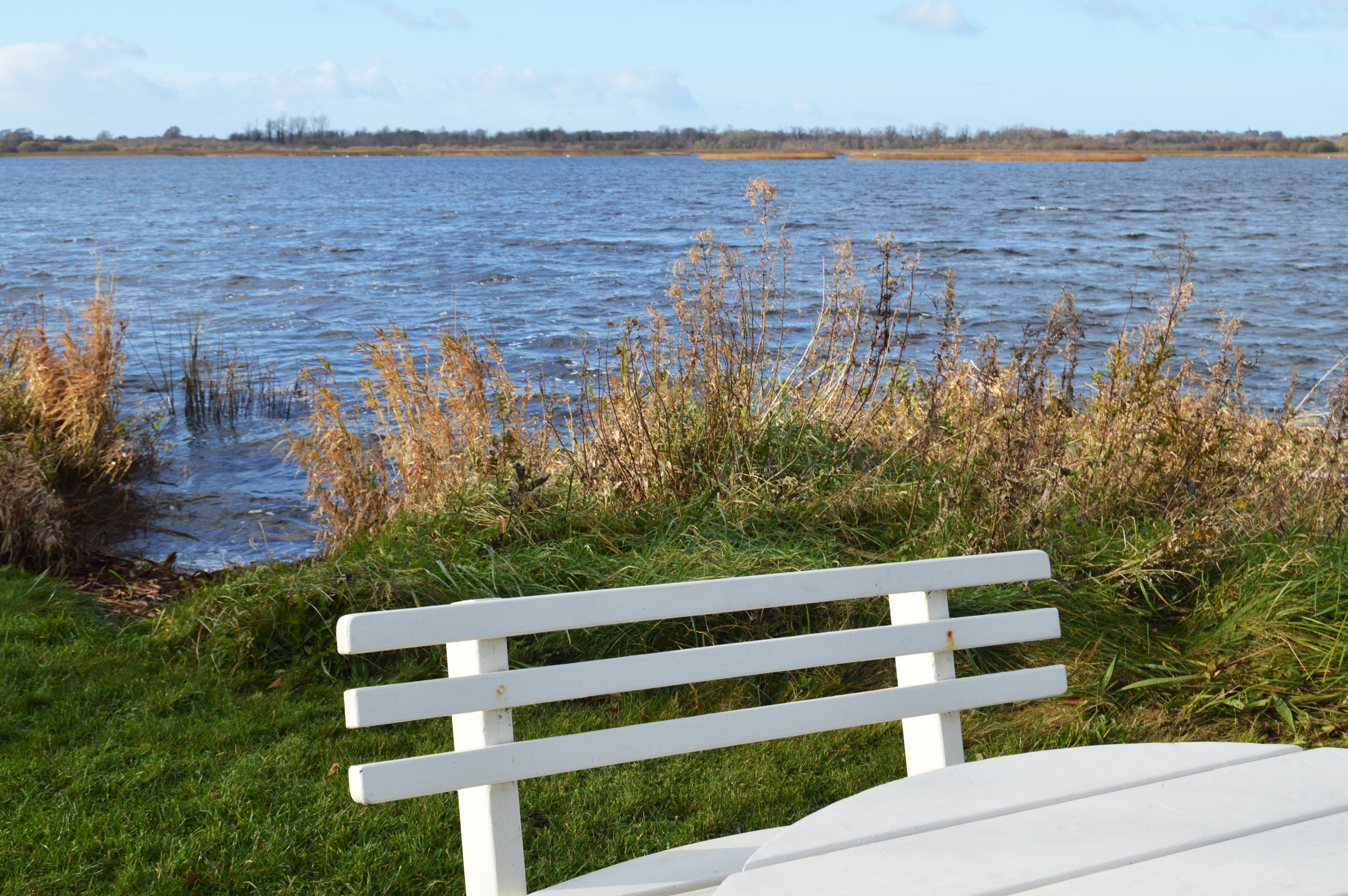 Free stock photo of bench, nature, sky, water