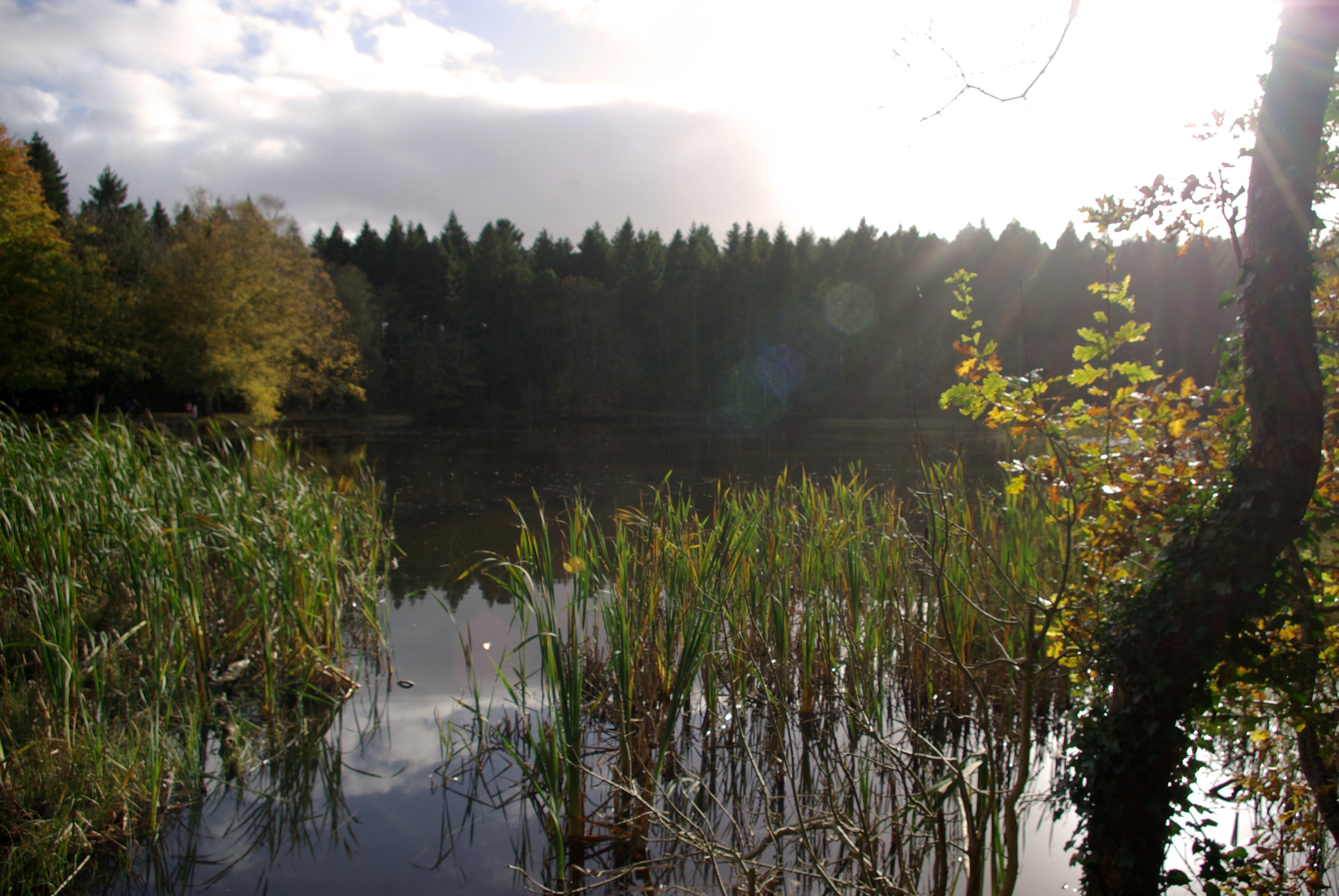 Free stock photo of nature, water, sun, trees