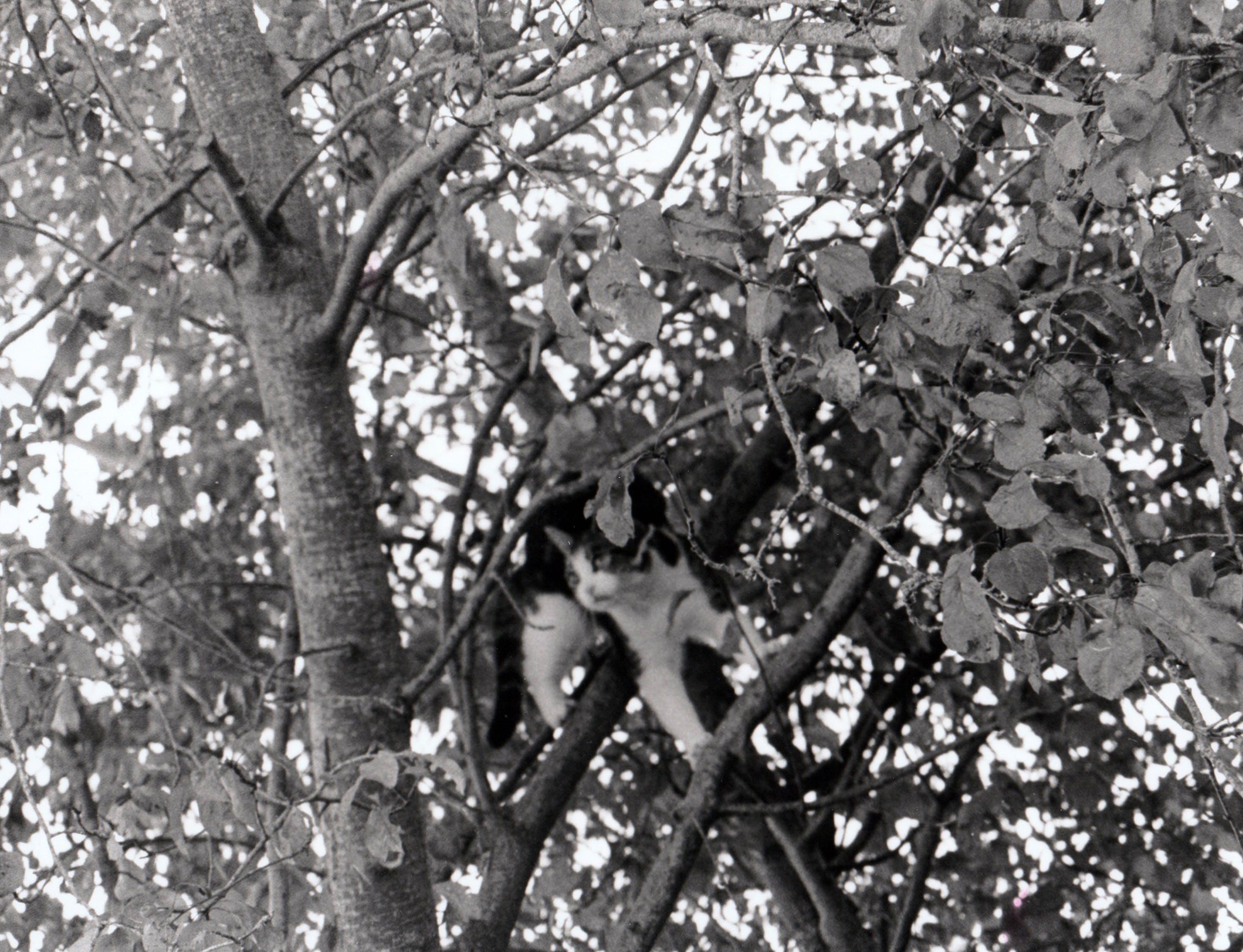 Free stock photo of nature, tree, cat, black and white