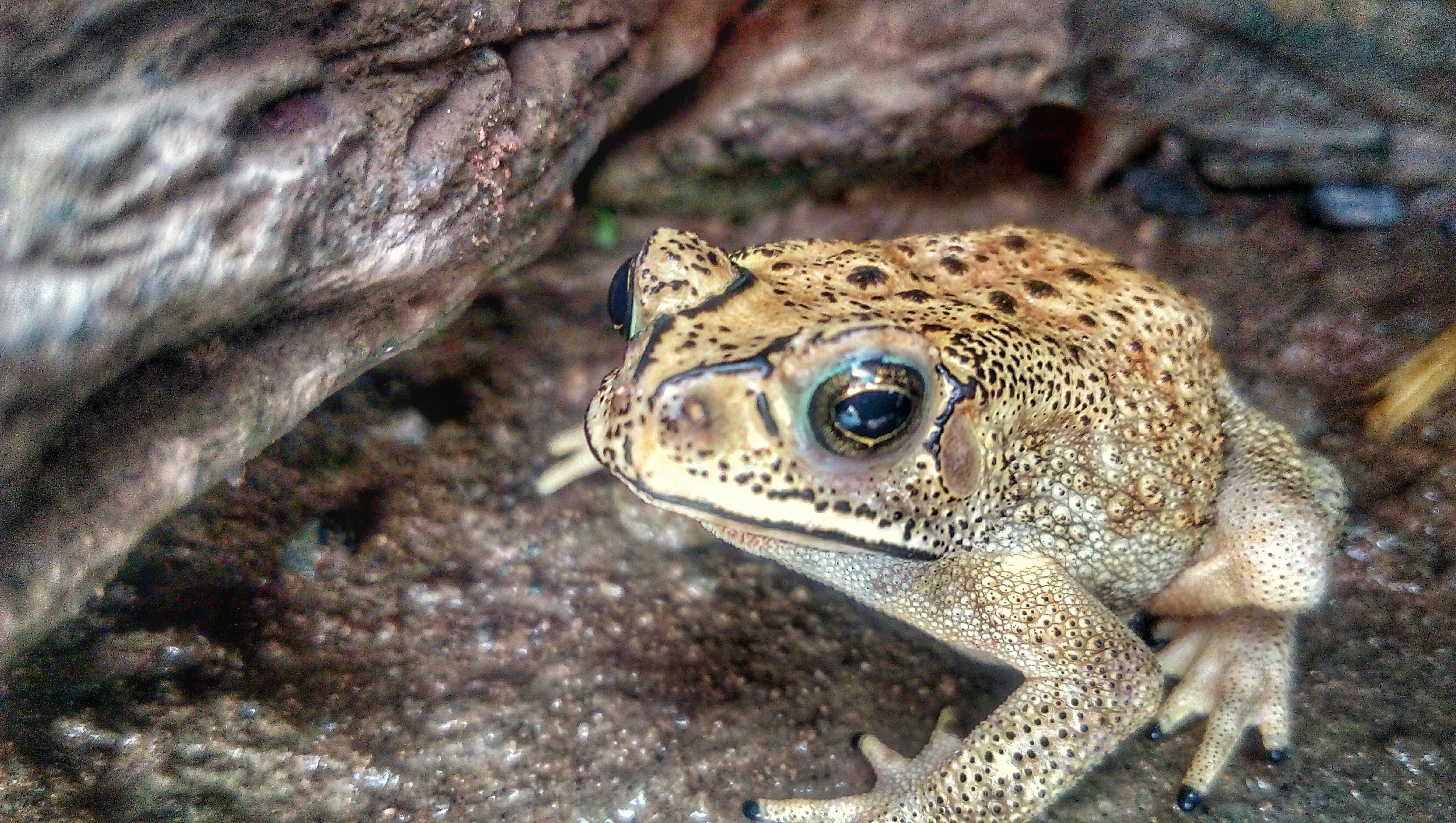 Foto d'estoc gratuïta de #frogs #amphibians #amphibian #porg #frogsfinstag