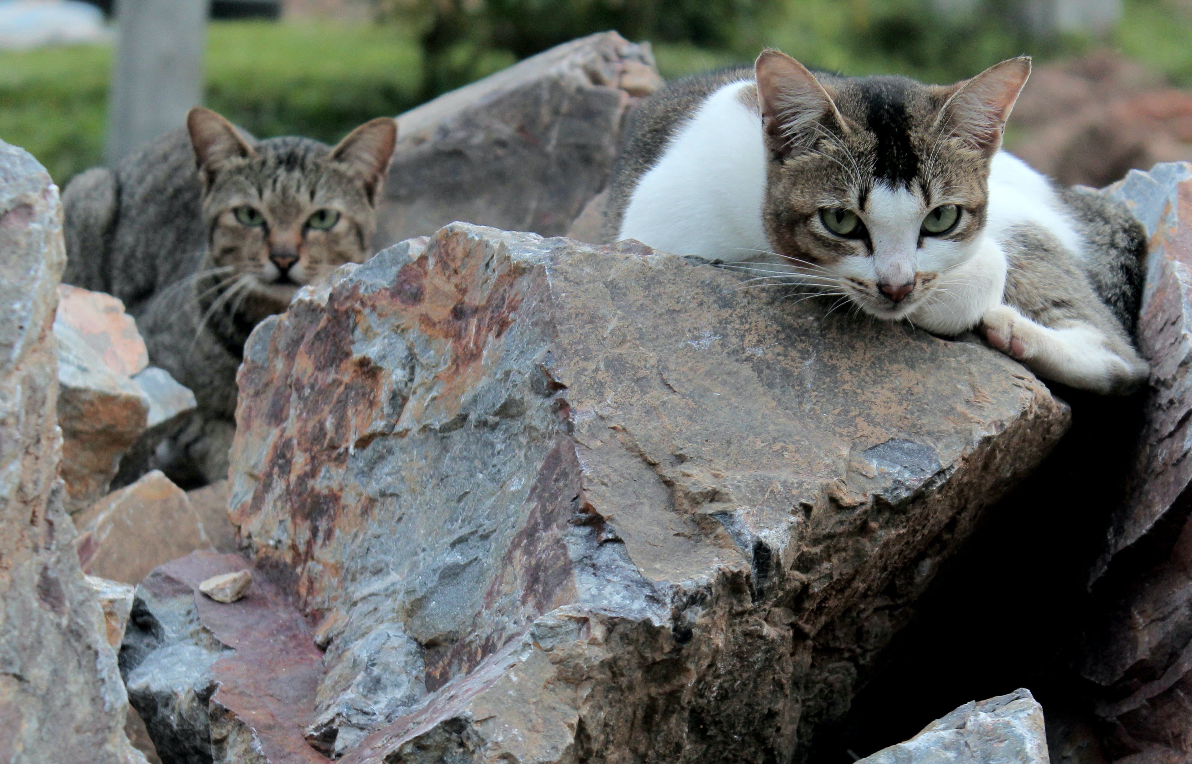 Free stock photo of #cat, #landscape, #Macro, #neko
