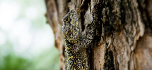 Brown Black Yellow Beige Lizard Climbing on Brown Tree