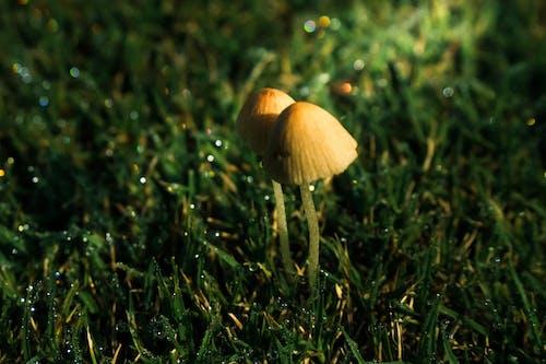 Ilmainen kuvapankkikuva tunnisteilla heinäpelto, jauhettu, kenttä, ruoho