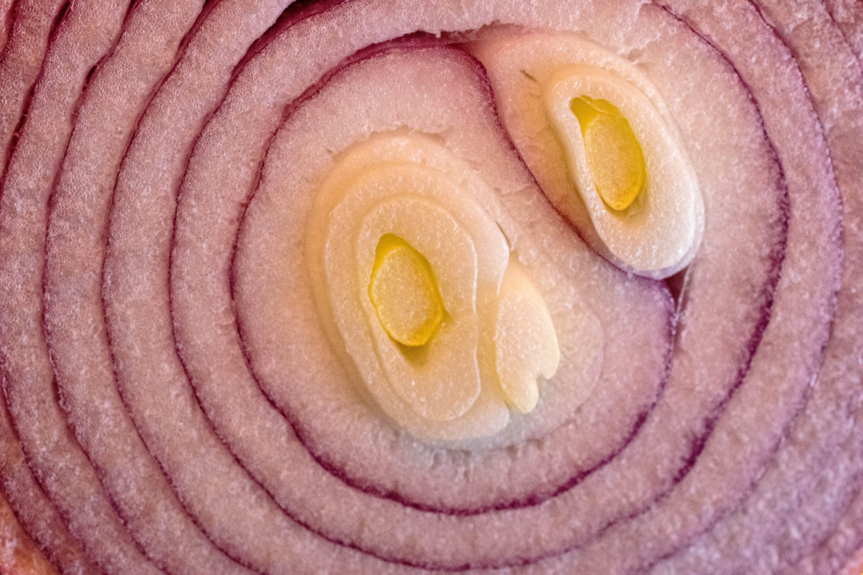 Free stock photo of abstract, circles, food, macro photo