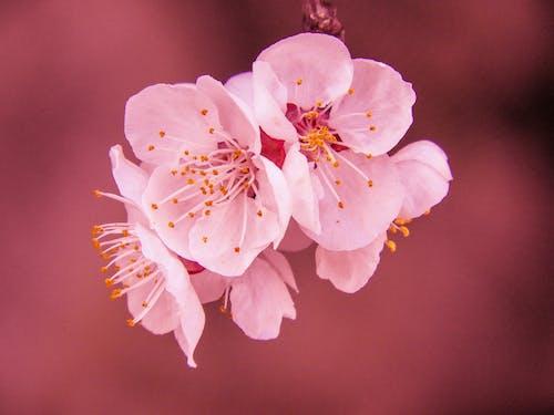 Gratis arkivbilde med årstid, blomster, blomsterblad, delikat