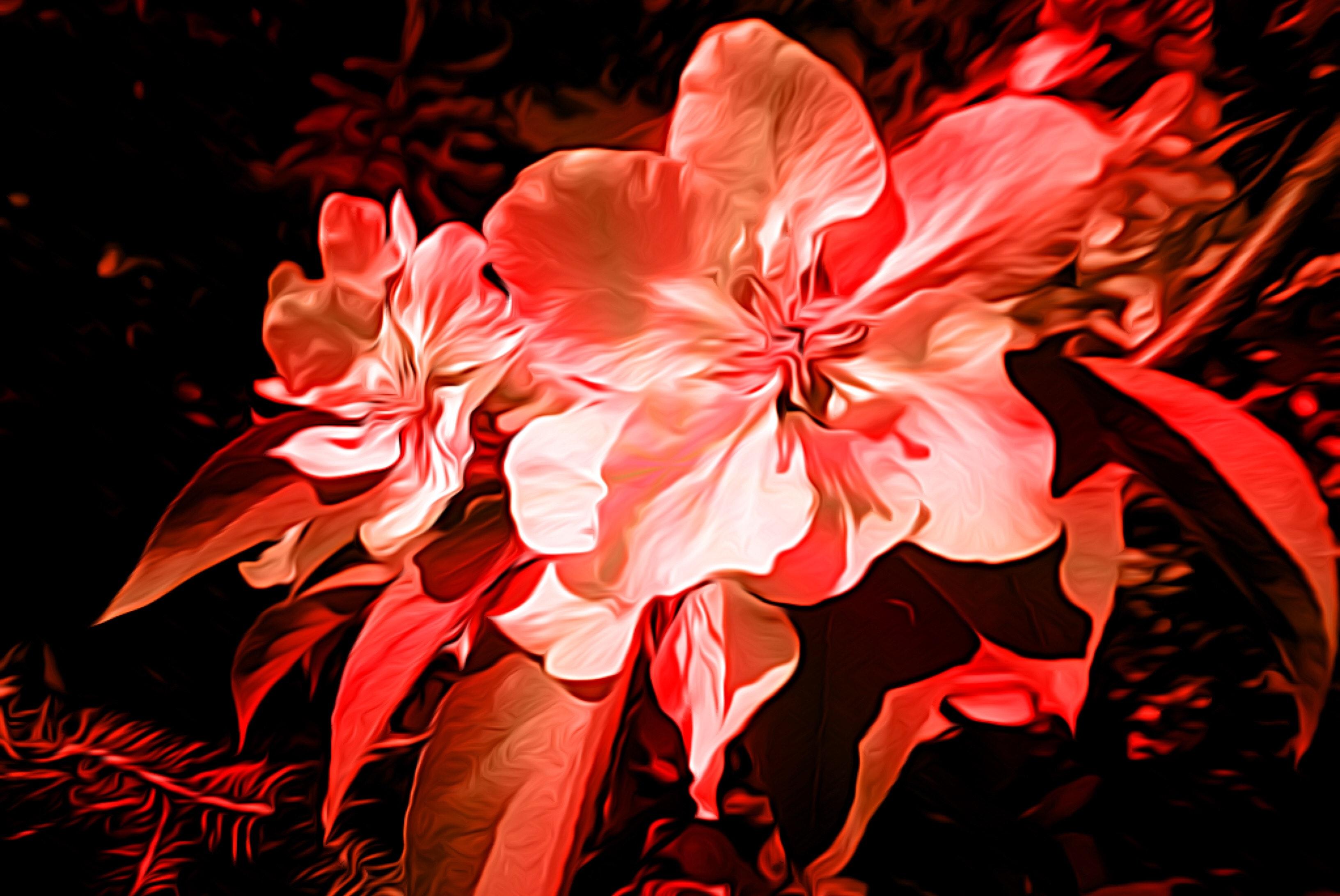Free stock photo of art, Flowers art.