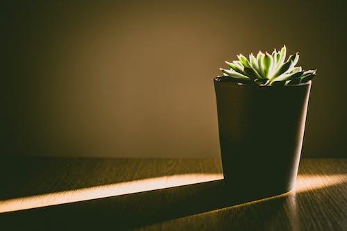 Gratis stockfoto met binnen, bloempot, botanisch, donker