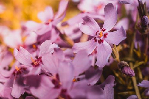 Ingyenes stockfotó bimbó, botanikus, évszak, fényes témában