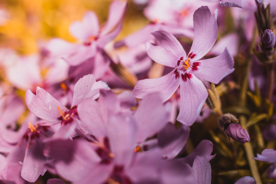bonic, botànic, brillant