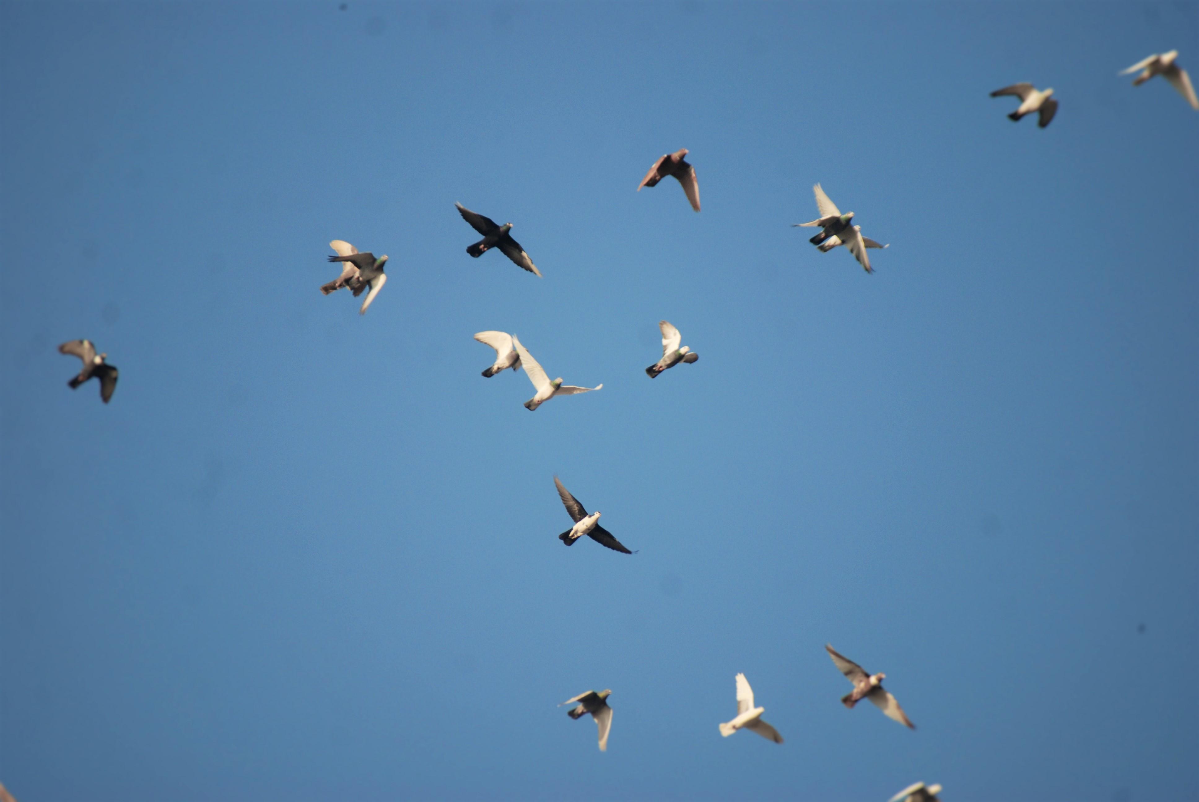 Stiahnite si zdarma túto fotografiu o Vták Dom Bird Box Kŕmne Miesto z Pixabay knižnice public domain obrázkov a videí.