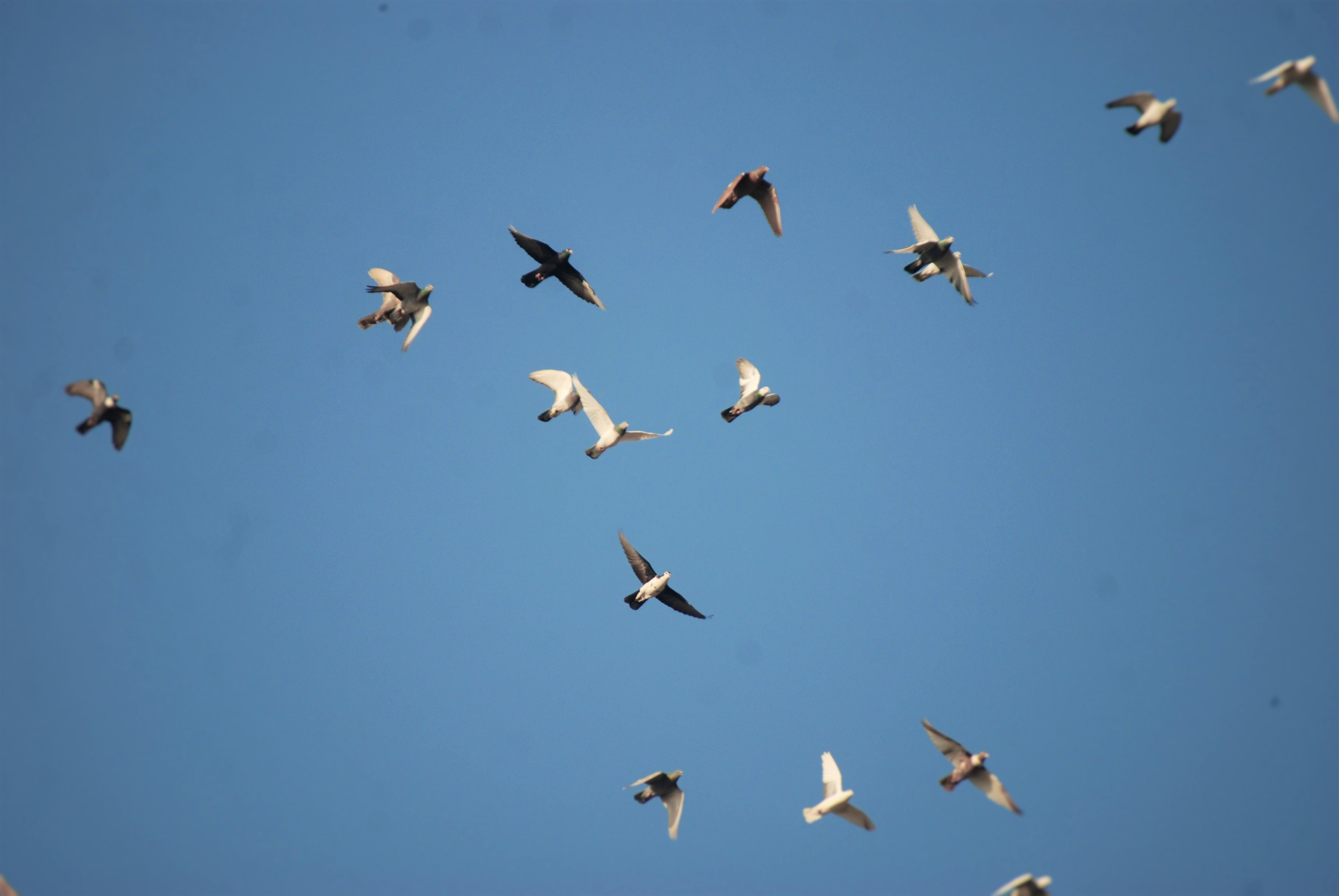 Free stock photo of birds, Birds for fly, love birds