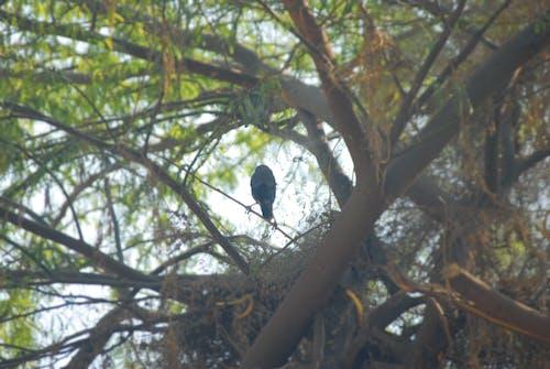 Free stock photo of Alone bird, bird, Bird alone life