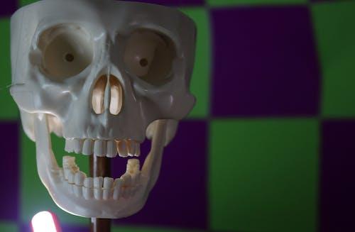 Free stock photo of bones, skull