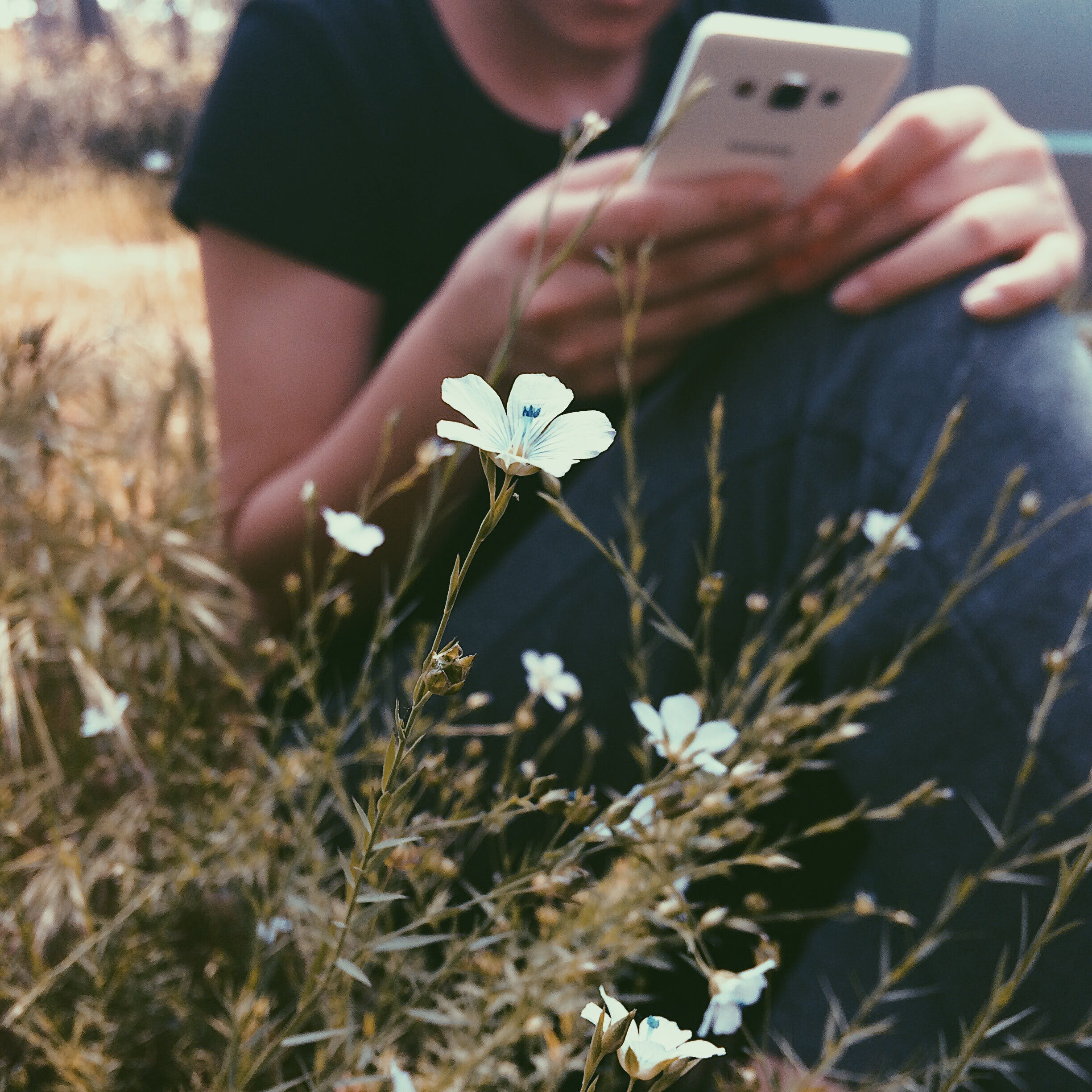 Selective Focus Photography of White Petaled Flowers Near Woman Holding Smartphone