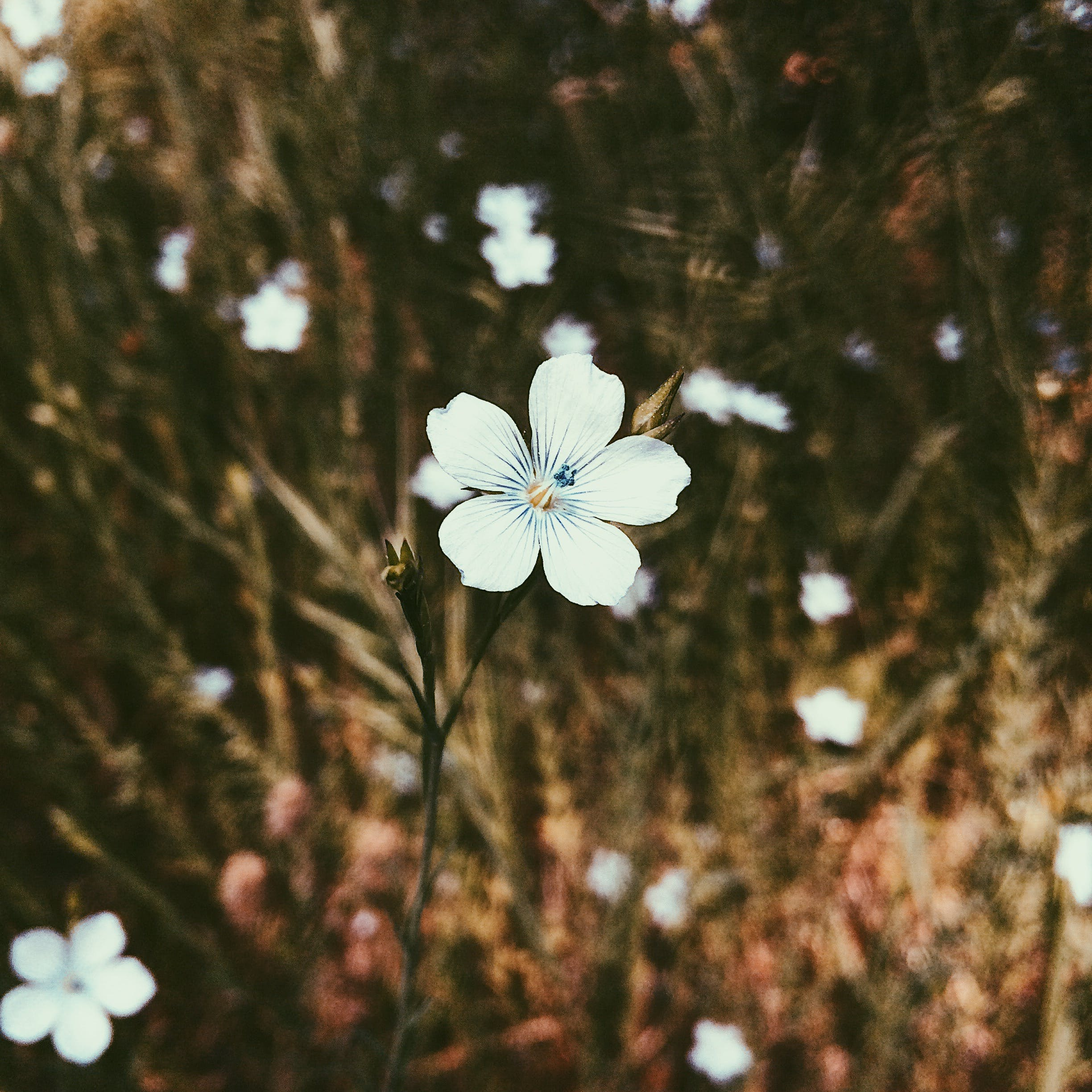 White Petaled Flower in Closeup Photo