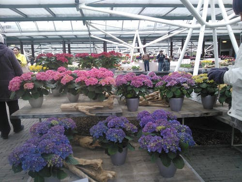 Gratis lagerfoto af violette blomster på gryder