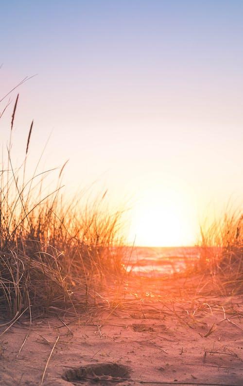 Δωρεάν στοκ φωτογραφιών με αυγή, γρασίδι, δύση του ηλίου, ελαφρύς