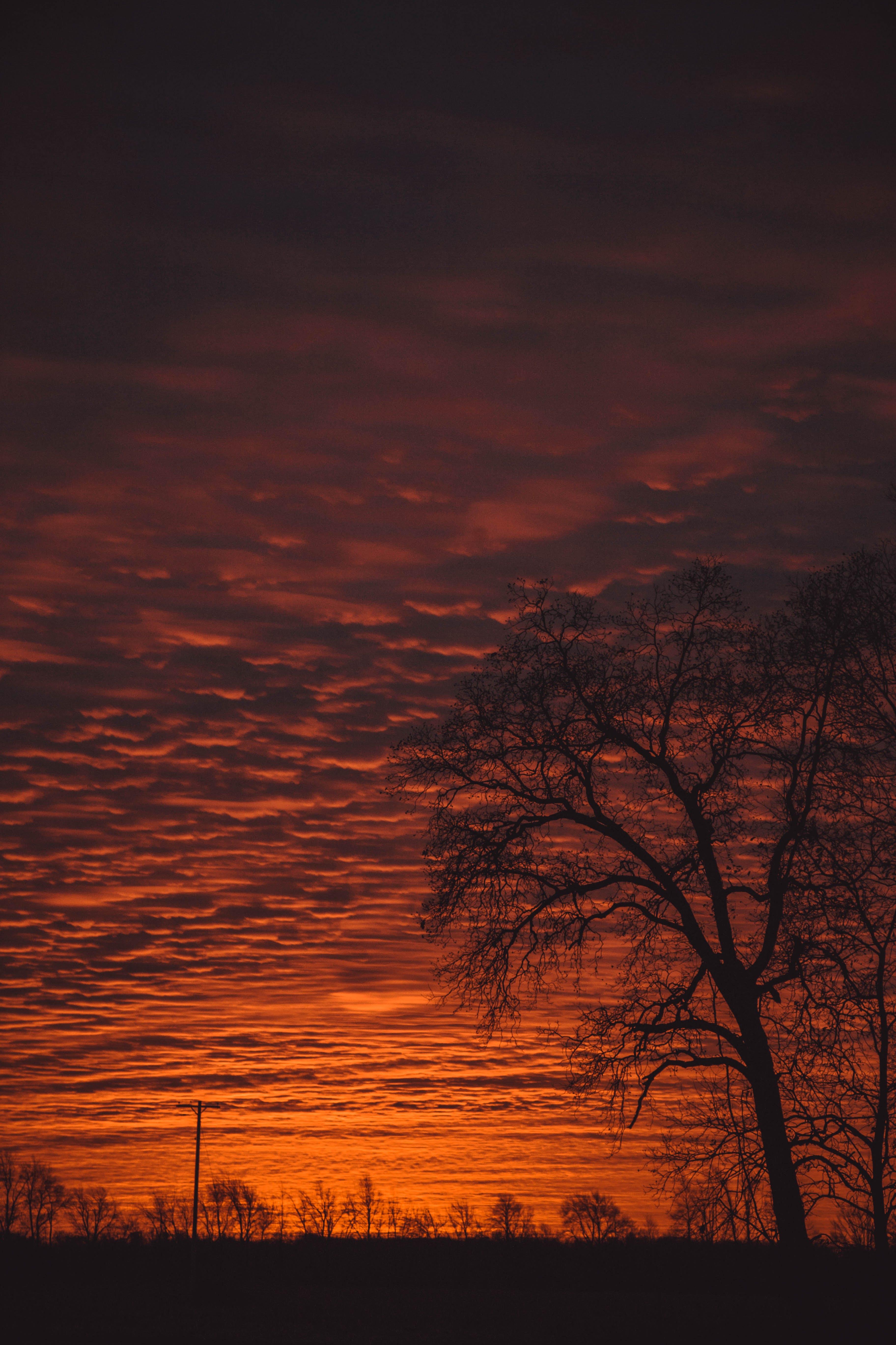 Photo of Tree Under Sunset